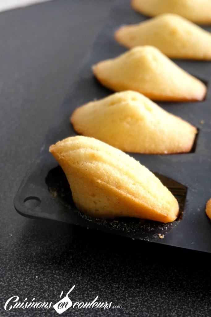 Madeleines-vanille-682x1024 - Madeleines à la vanille