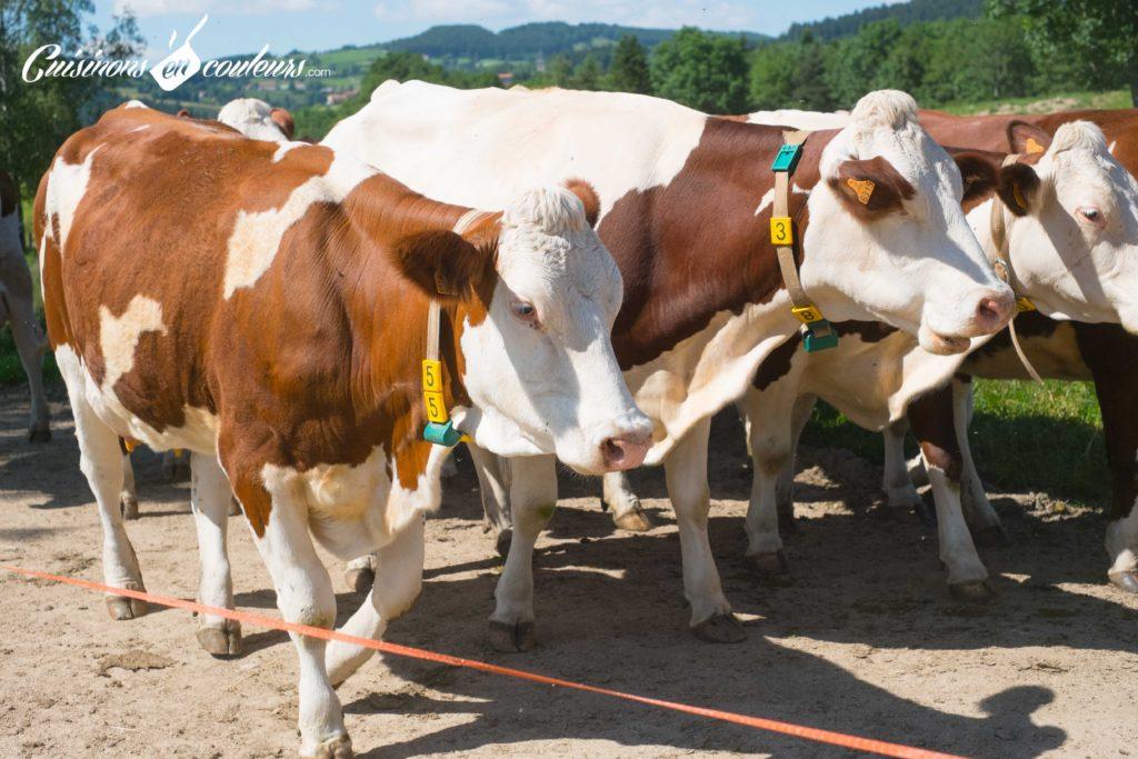 les-laitiers-responsables-10-1024x683 - Immersion dans une ferme Candia avec Les Laitiers Responsables