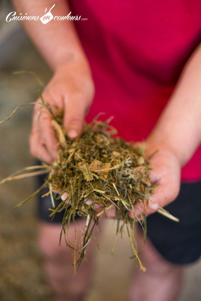 les-laitiers-responsables-6-683x1024 - Immersion dans une ferme Candia avec Les Laitiers Responsables