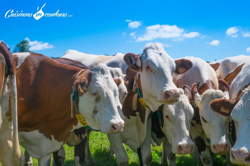 les-laitiers-responsables-7-1024x683 - Immersion dans une ferme Candia avec Les Laitiers Responsables