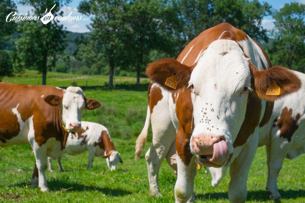 les-laitiers-responsables-8-1024x683 - Immersion dans une ferme Candia avec Les Laitiers Responsables