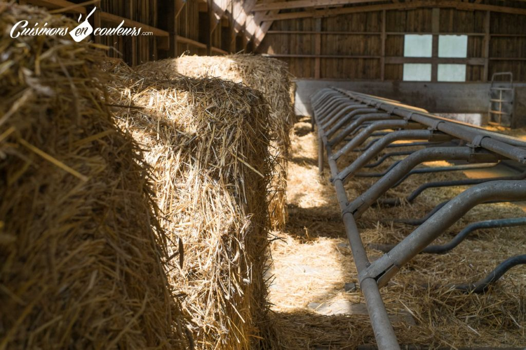 les-laitiers-responsables-9-1024x683 - Immersion dans une ferme Candia avec Les Laitiers Responsables